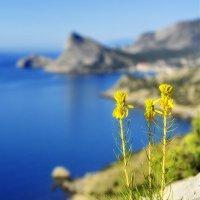 Цветы  на камнях. :: ОЛЕГ ПАНКОВ