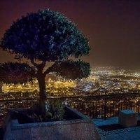 Печальное дерево. :: Naum