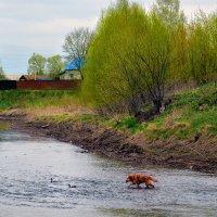 Собачья рыбалка :: Юрий