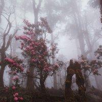 Пробиваясь сквозь лесной туман :: Дмитрий Купрацевич