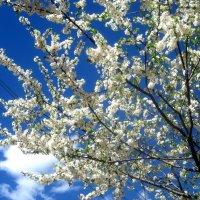 Весеннее небо :: Елена Семигина