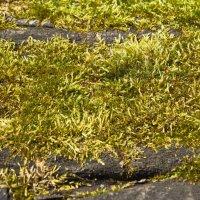 Зелёный бархат мха :: val-isaew2010 Валерий Исаев