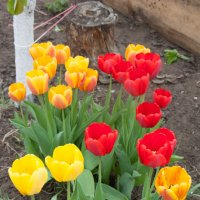 Яркие краски весны! :: Татьяна_Ш