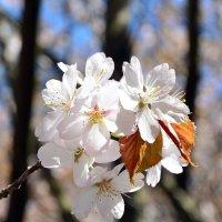Цветы. :: Oleg4618 Шутченко