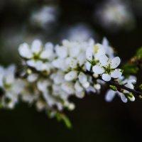 Цветок :: Юрий Мартаков