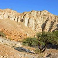 Оазис в пустыне :: Виктор Льготин