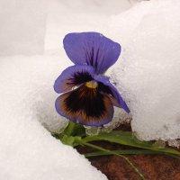 Первый снег :: Всеволод Хамуев