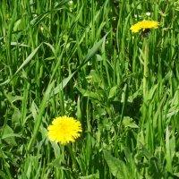Весенний этюд... :: Тамара (st.tamara)