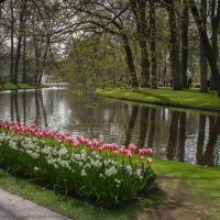 Tulips in Holland 04-2015 (6) :: Arturs Ancans