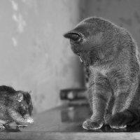 Соня и Пикесель :: Анна Хрипачева