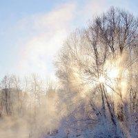 Зимнее утро :: Денис Масленников