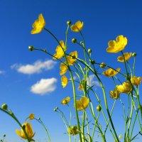 Время дивное весеннее,  Голубеют небеса... :: Galina Dzubina