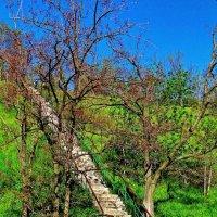 лестница к морю :: Александр Корчемный