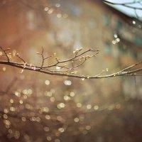 Солнце после дождя :: Олеся Стоцкая