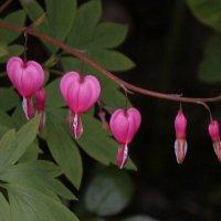 Первые цветы :: Дмитрий Лебедихин