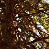 в лесу :: Кристина Семакина