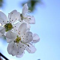 Весна :: Натали