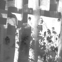 Букет ситцевых ромашек :: Виктория