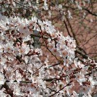весна :: АННЕТТА ФОТОМОДЕЛЕЛЮБИТЕЛЬ