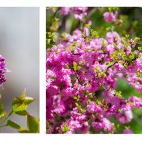 Весна :: aspirinka86 Спирина