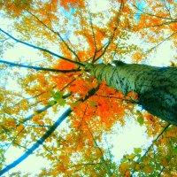 Золотая Осень. :: Кристина Девяткина