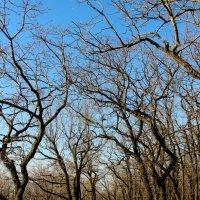 аллея деревьев в лесу осенью :: Ангелина К