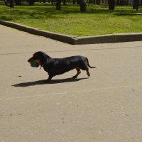 08.05.2015 в парке у дома. :: Ловец .