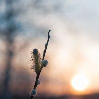 Мягкий закат :: Марина Бойко