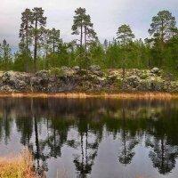 Безымянное озеро. :: kolin marsh