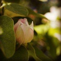 Нежность весны :: Юлия Быкова