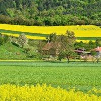 Цветные поля :: Николай Танаев