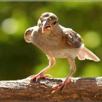 """позывные  """"Я  орел!"""" :: linnud"""