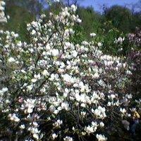 В саду! :: Миша Любчик