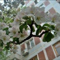 После дождика... :: Нина Корешкова