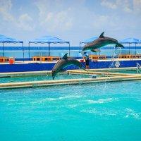Дельфины :: Лёша