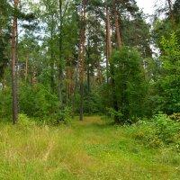 Летний лес :: Милешкин Владимир Алексеевич