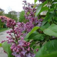 Весна… И хочется весь мир обнять… согреть теплом души… :: Galina Dzubina