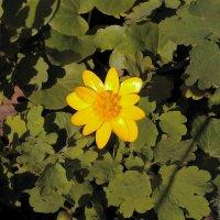 Желтый цвет :: Kira Kredova