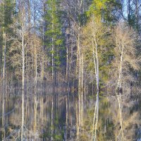 Разлив в лесу :: Станислав Новиков