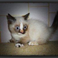 У страха глаза....ВЕЛИКИ...!!!!!!!!! :: Людмила Богданова (Скачко)