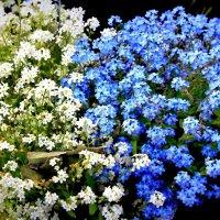Бело-голубые :: Alexander