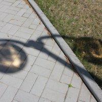 Отражение в разных плоскостях :: Наталья Золотых-Сибирская