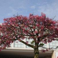 Ккое дерево! :: imants_leopolds žīgurs