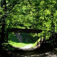прогулка по Воробьевым горам :: Татьяна