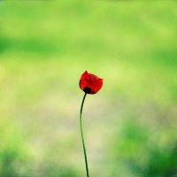 Одиночество.... :: Олеся Стоцкая