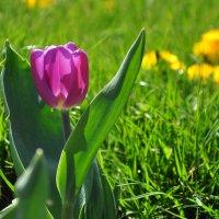 Весна :: dizelma Бак