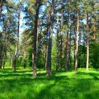 Летом в лесу :: Милешкин Владимир Алексеевич