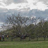 Чудо дерево. :: Яков Реймер