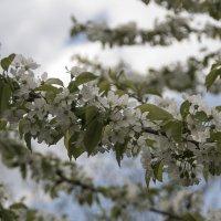 Ветвь полная цветов и листьев! :: Яков Реймер