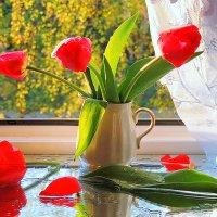 Тюльпаны майским ранним утром на моем окне :: Павлова Татьяна Павлова